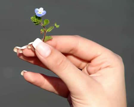 Como sanar el dedo en la mano del pus bajo la uña
